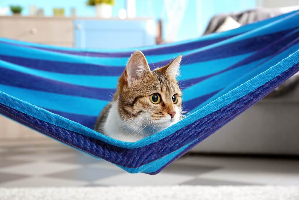 Helpful Tips and Resources for a First-time Hammock Camper